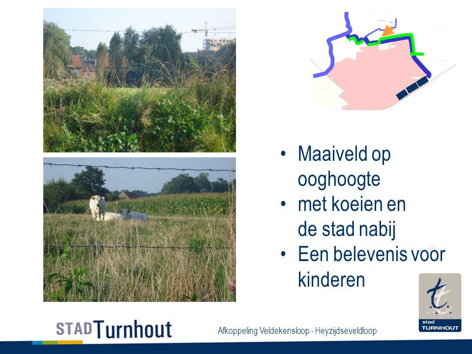 Afkoppeling Veldekensloop - Heyzijdseveldloop Maaiveld op ooghoogte met koeien en de stad nabij Een belevenis voor kinderen