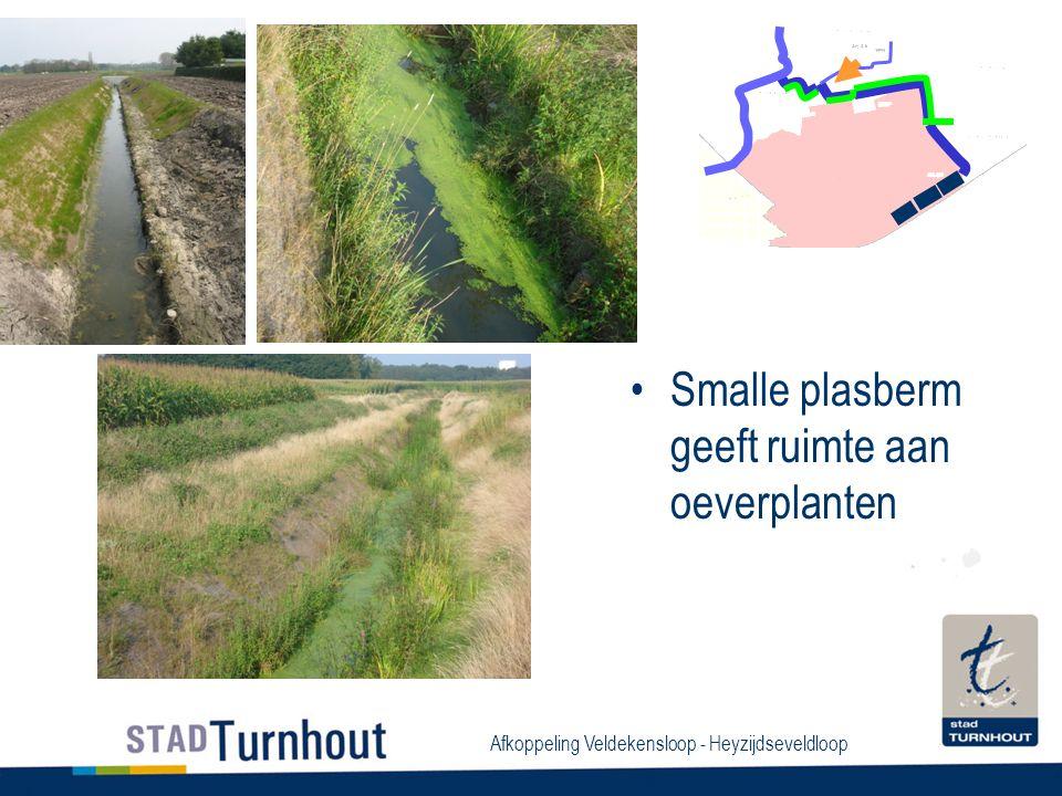 Afkoppeling Veldekensloop - Heyzijdseveldloop Smalle plasberm geeft ruimte aan oeverplanten