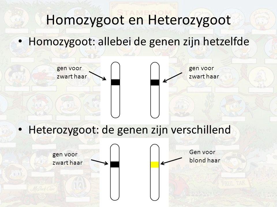 Homozygoot en Heterozygoot Homozygoot: allebei de genen zijn hetzelfde Heterozygoot: de genen zijn verschillend gen voor zwart haar Gen voor blond haa