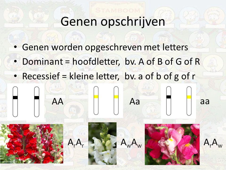 Genen opschrijven Genen worden opgeschreven met letters Dominant = hoofdletter, bv. A of B of G of R Recessief = kleine letter, bv. a of b of g of r A