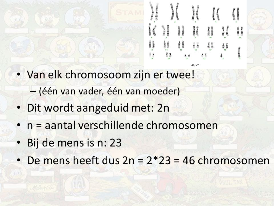 Van elk chromosoom zijn er twee! – (één van vader, één van moeder) Dit wordt aangeduid met: 2n n = aantal verschillende chromosomen Bij de mens is n: