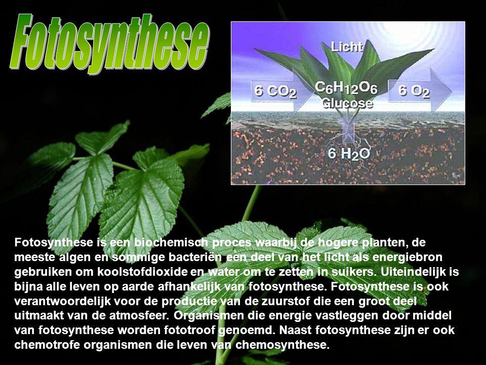 Fotosynthese is een biochemisch proces waarbij de hogere planten, de meeste algen en sommige bacteriën een deel van het licht als energiebron gebruike