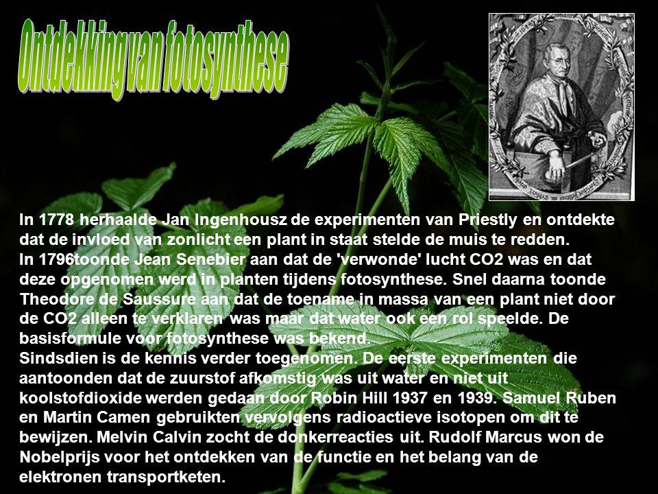 In 1778 herhaalde Jan Ingenhousz de experimenten van Priestly en ontdekte dat de invloed van zonlicht een plant in staat stelde de muis te redden. In