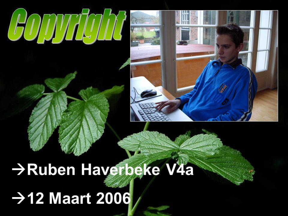  Ruben Haverbeke V4a  12 Maart 2006