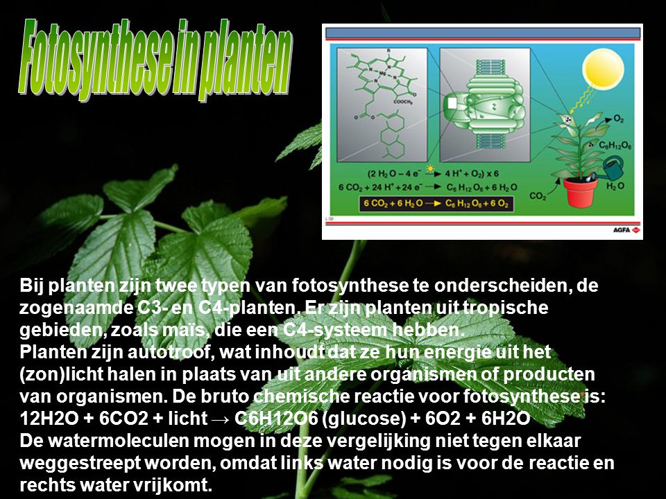 Bij planten zijn twee typen van fotosynthese te onderscheiden, de zogenaamde C3- en C4-planten. Er zijn planten uit tropische gebieden, zoals maïs, di