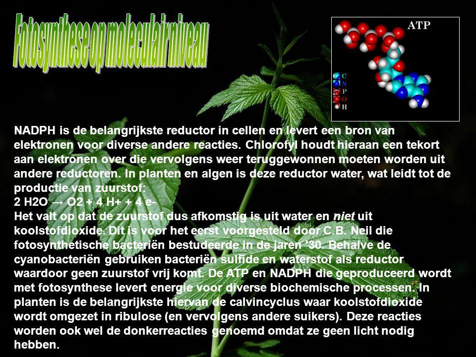 NADPH is de belangrijkste reductor in cellen en levert een bron van elektronen voor diverse andere reacties. Chlorofyl houdt hieraan een tekort aan el