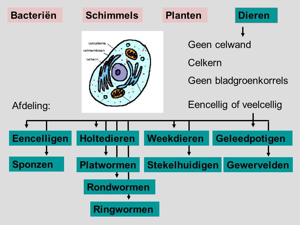 Sponzen Gewervelden Geen celwand Celkern Geen bladgroenkorrels Eencellig of veelcellig EencelligenWeekdieren BacteriënSchimmelsPlanten Dieren Ringworm