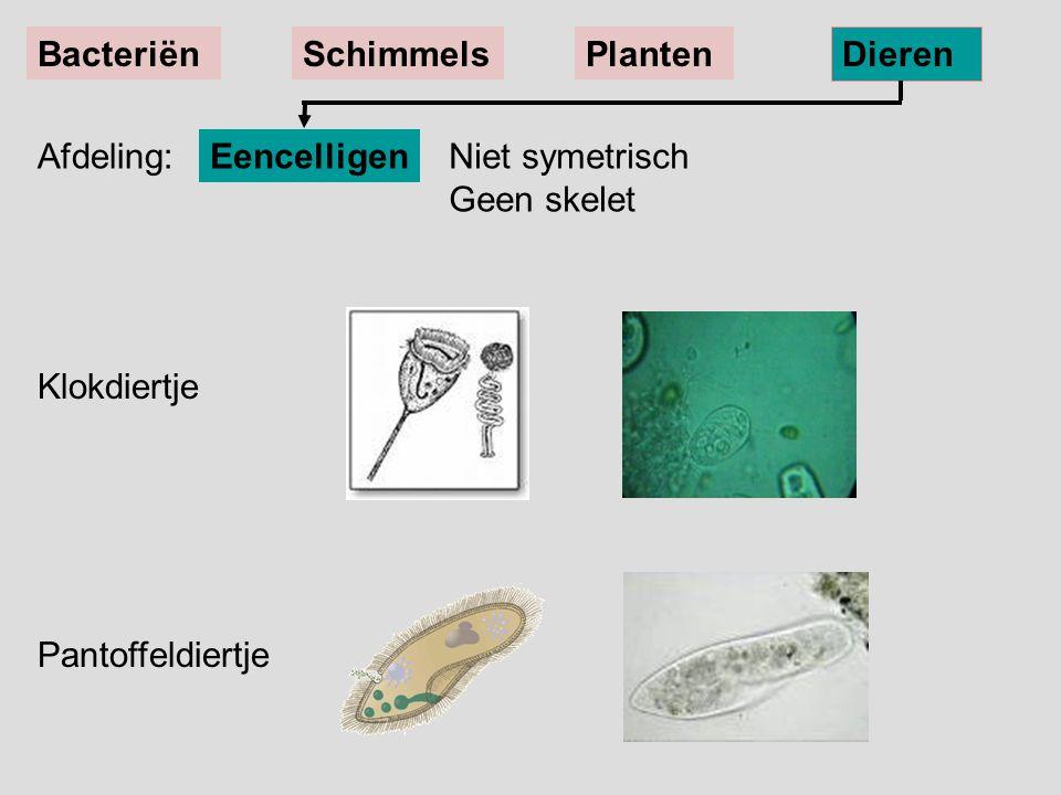 EencelligenNiet symetrisch Geen skelet BacteriënSchimmelsPlanten Dieren Klokdiertje Pantoffeldiertje Afdeling: