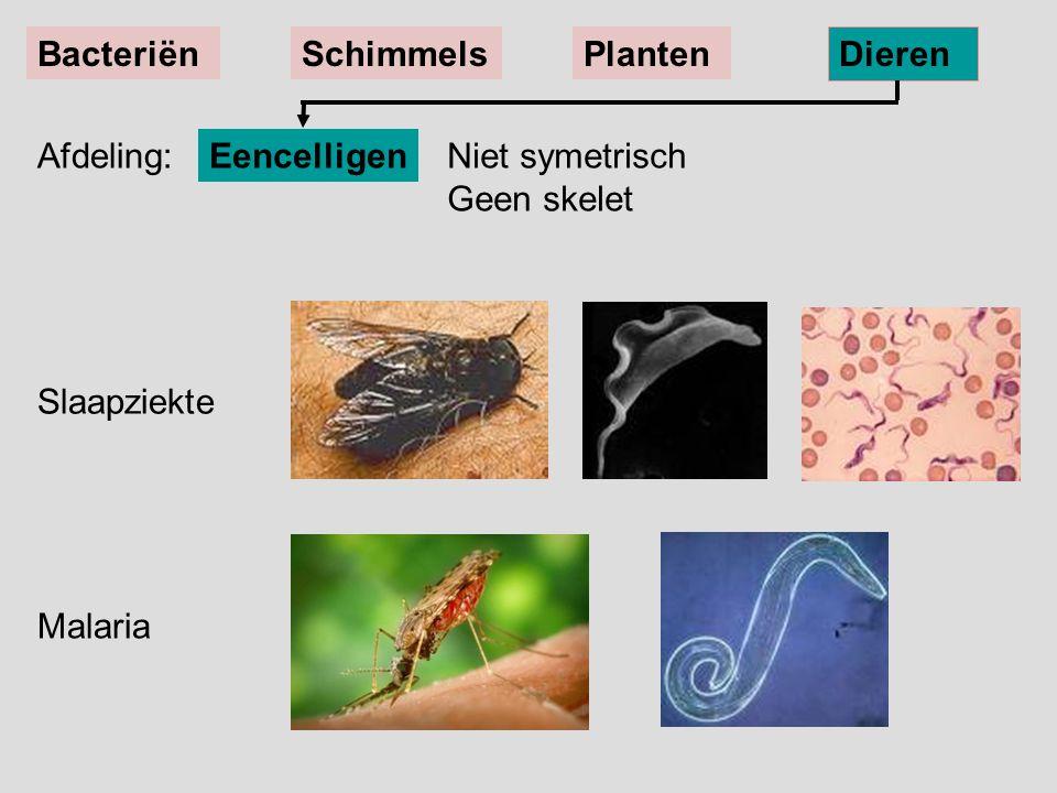 Slaapziekte Malaria EencelligenNiet symetrisch Geen skelet BacteriënSchimmelsPlanten Dieren Afdeling: