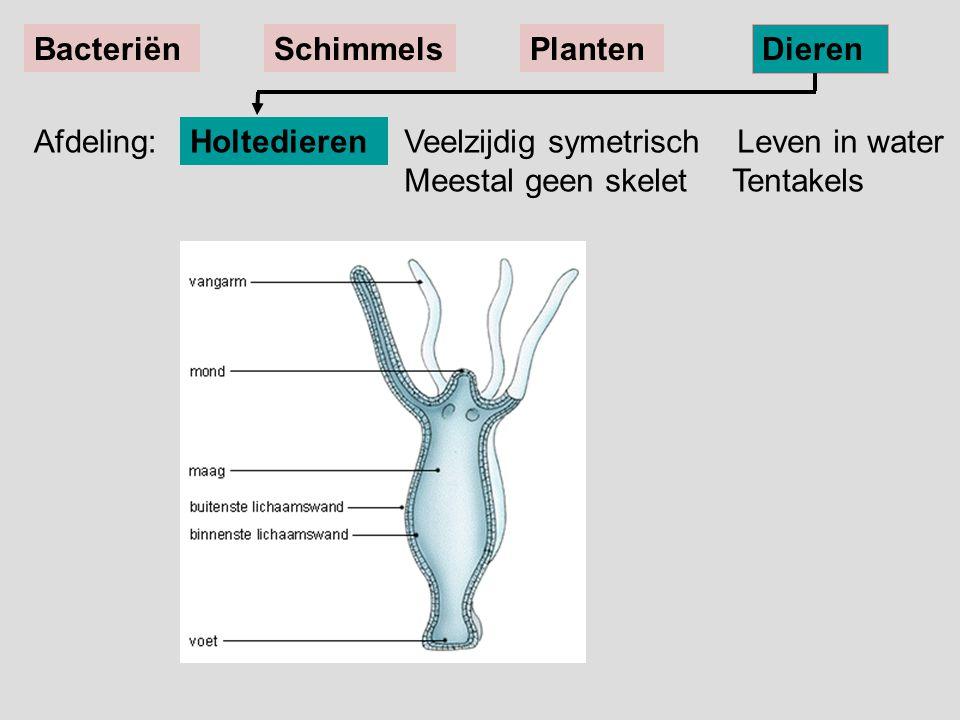 Veelzijdig symetrisch Leven in water Meestal geen skelet Tentakels Holtedieren BacteriënSchimmelsPlanten Dieren Afdeling: