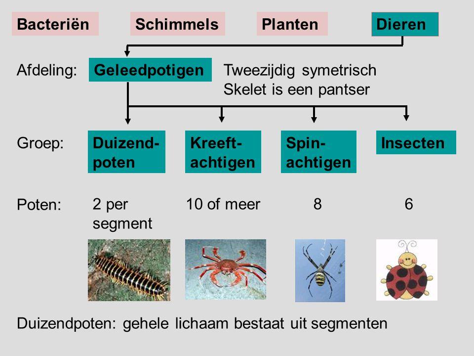 Duizend- poten Spin- achtigen Kreeft- achtigen Insecten Tweezijdig symetrisch Skelet is een pantser Geleedpotigen BacteriënSchimmelsPlanten Dieren Afd