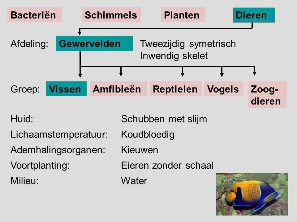 VissenReptielenAmfibieënVogels Tweezijdig symetrisch Inwendig skelet Gewervelden BacteriënSchimmelsPlanten Dieren Afdeling: Groep:Zoog- dieren Huid: L