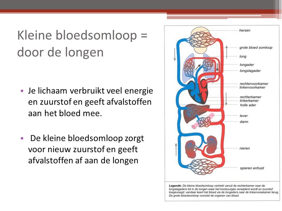 Kleine bloedsomloop = door de longen Je lichaam verbruikt veel energie en zuurstof en geeft afvalstoffen aan het bloed mee.