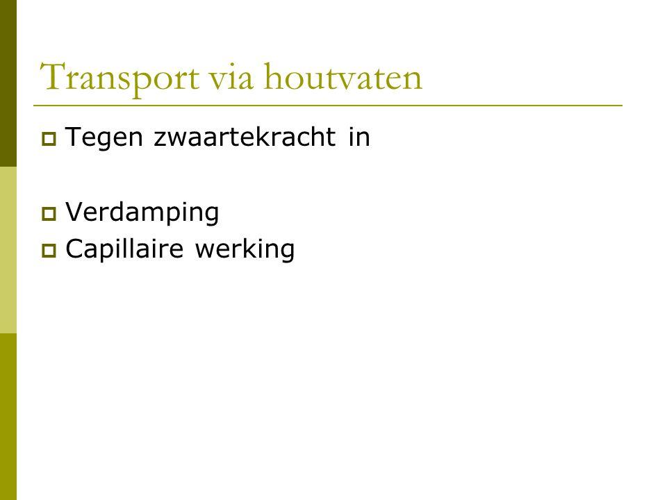Transport via houtvaten  Tegen zwaartekracht in  Verdamping  Capillaire werking