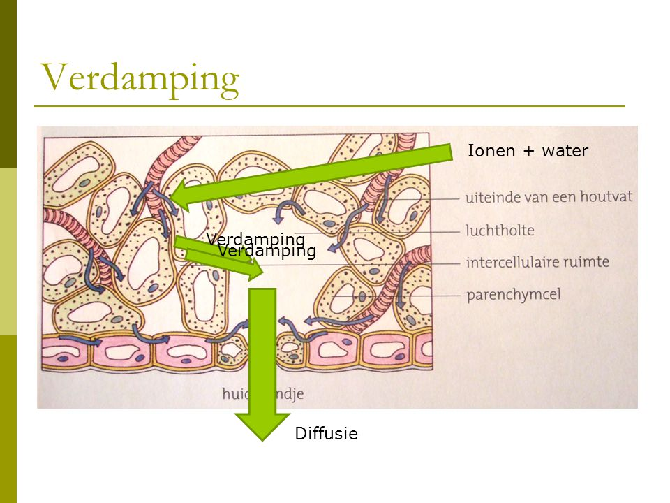 Verdamping Ionen + water Diffusie Verdamping