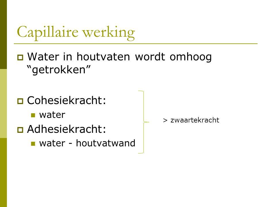 """Capillaire werking  Water in houtvaten wordt omhoog """"getrokken""""  Cohesiekracht: water  Adhesiekracht: water - houtvatwand > zwaartekracht"""