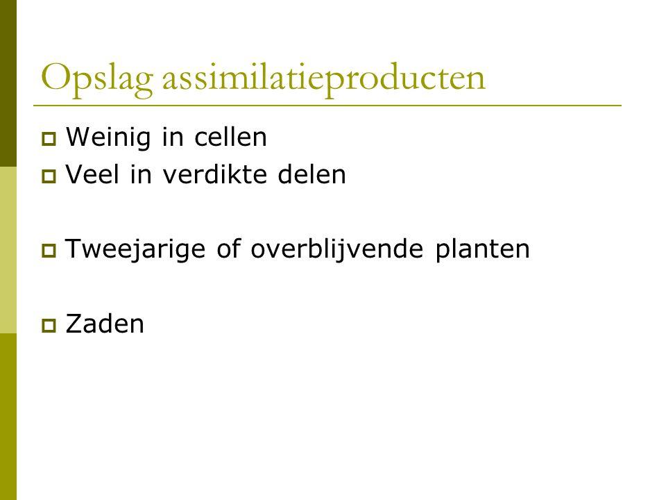 Opslag assimilatieproducten  Weinig in cellen  Veel in verdikte delen  Tweejarige of overblijvende planten  Zaden