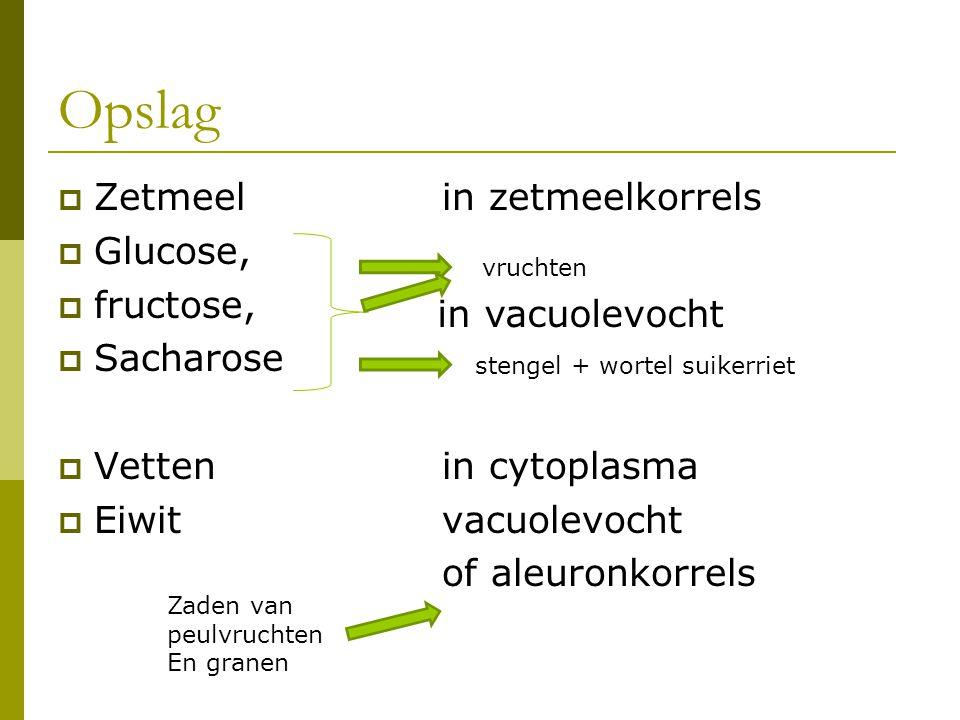  Zetmeel in zetmeelkorrels  Glucose,  fructose,  Sacharose  Vettenin cytoplasma  Eiwitvacuolevocht of aleuronkorrels in vacuolevocht stengel + w