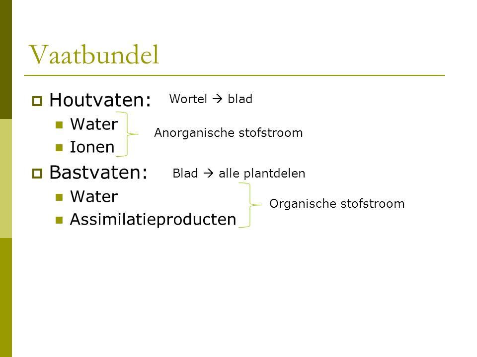 Vaatbundel  Houtvaten: Water Ionen  Bastvaten: Water Assimilatieproducten Anorganische stofstroom Organische stofstroom Wortel  blad Blad  alle pl