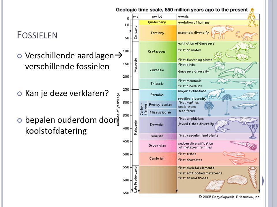 F OSSIELEN Verschillende aardlagen  verschillende fossielen Kan je deze verklaren? bepalen ouderdom door koolstofdatering