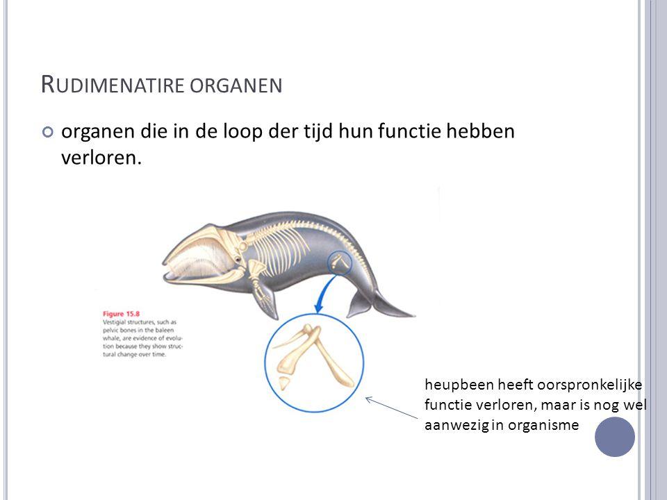 R UDIMENATIRE ORGANEN organen die in de loop der tijd hun functie hebben verloren. heupbeen heeft oorspronkelijke functie verloren, maar is nog wel aa