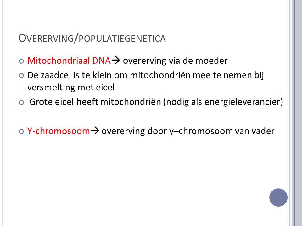 O VERERVING / POPULATIEGENETICA Mitochondriaal DNA  overerving via de moeder De zaadcel is te klein om mitochondriën mee te nemen bij versmelting met