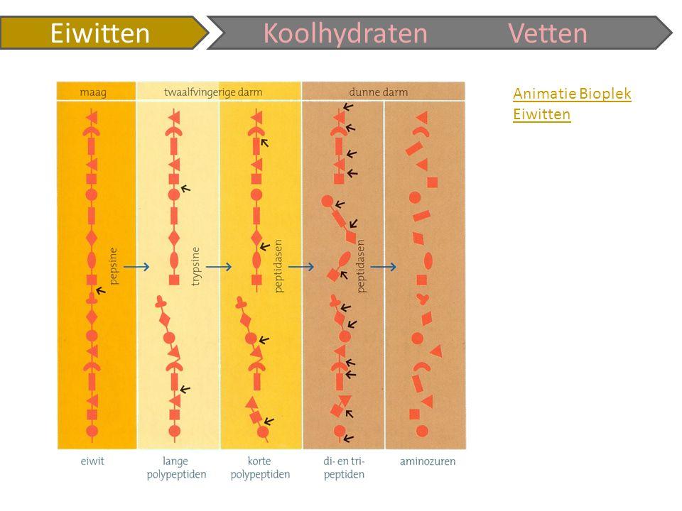 Animatie Bioplek Eiwitten KoolhydratenVetten