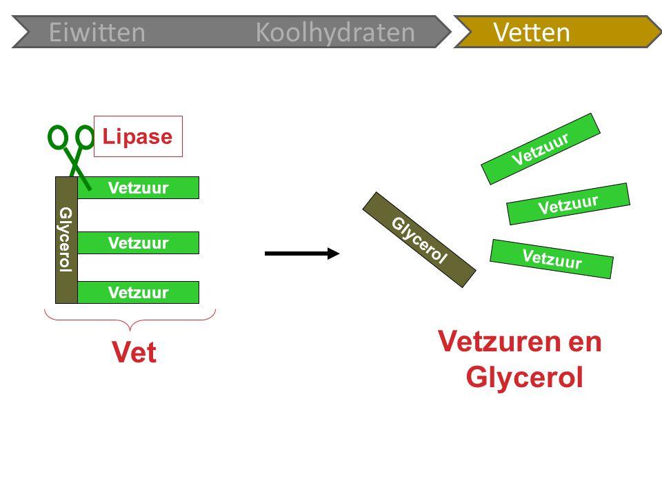 Glycerol Vetzuur Glycerol Vetzuur Lipase Vet Vetzuren en Glycerol EiwittenKoolhydratenVetten