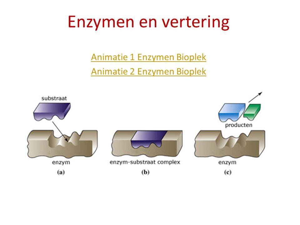 Enzymen en vertering Animatie 1 Enzymen Bioplek Animatie 2 Enzymen Bioplek