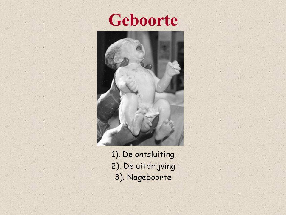 Geboorte 1). De ontsluiting 2). De uitdrijving 3). Nageboorte