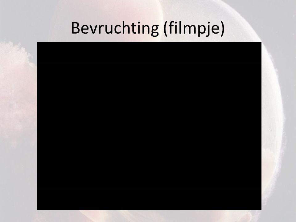 Bevruchting (filmpje)