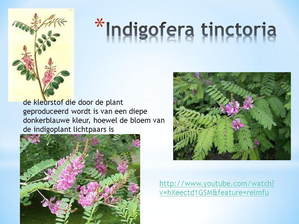de kleurstof die door de plant geproduceerd wordt is van een diepe donkerblauwe kleur, hoewel de bloem van de indigoplant lichtpaars is http://www.you