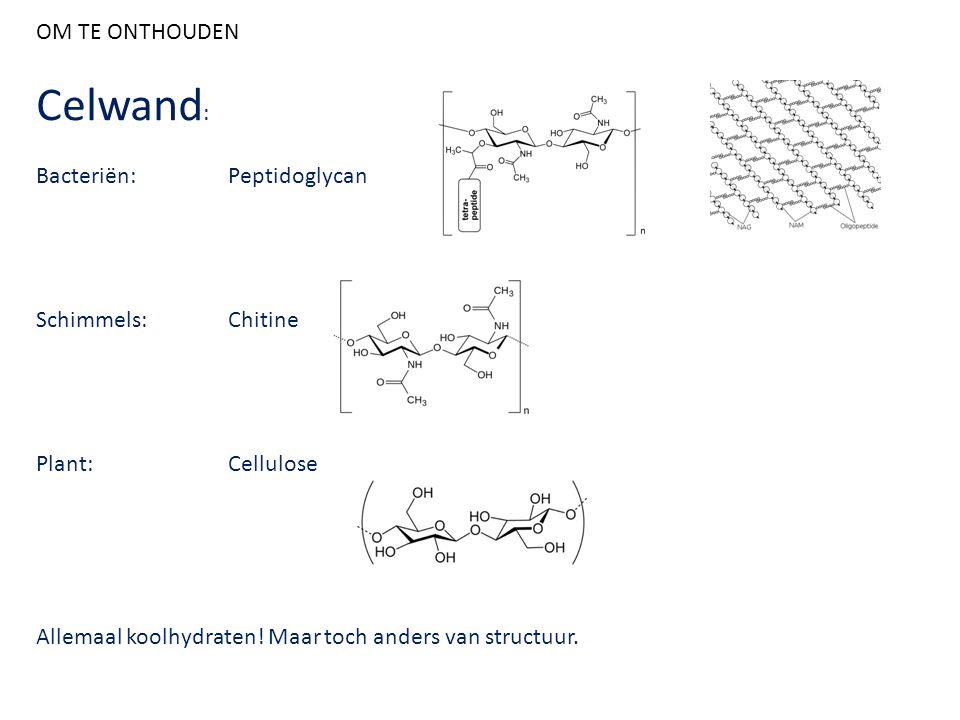 OM TE ONTHOUDEN Celwand : Bacteriën:Peptidoglycan Schimmels:Chitine Plant:Cellulose Allemaal koolhydraten! Maar toch anders van structuur.