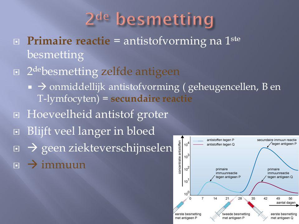  Primaire reactie = antistofvorming na 1 ste besmetting  2 de besmetting zelfde antigeen   onmiddellijk antistofvorming ( geheugencellen, B en T-l