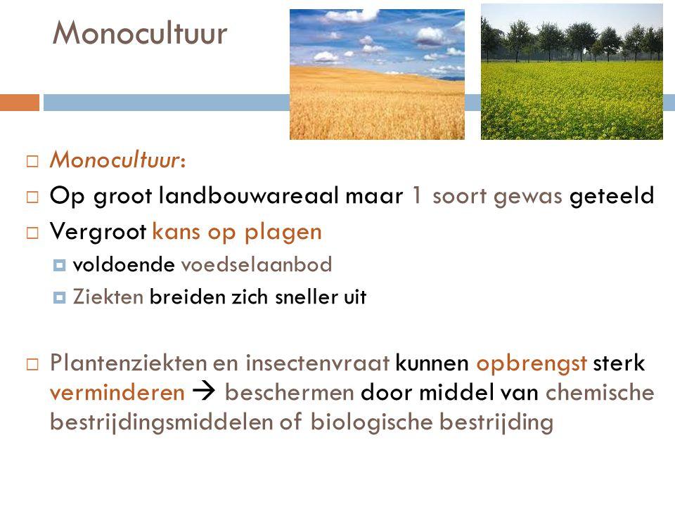 Monocultuur  Monocultuur:  Op groot landbouwareaal maar 1 soort gewas geteeld  Vergroot kans op plagen  voldoende voedselaanbod  Ziekten breiden
