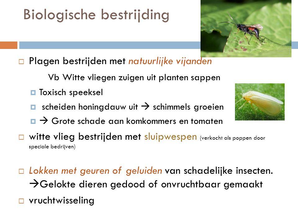 Biologische bestrijding  Plagen bestrijden met natuurlijke vijanden Vb Witte vliegen zuigen uit planten sappen  Toxisch speeksel  scheiden honingda