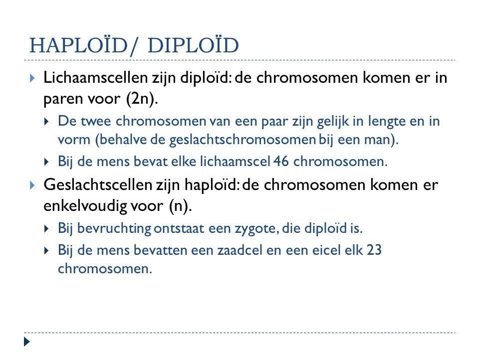 HAPLOÏD/ DIPLOÏD  Lichaamscellen zijn diploïd: de chromosomen komen er in paren voor (2n).  De twee chromosomen van een paar zijn gelijk in lengte e