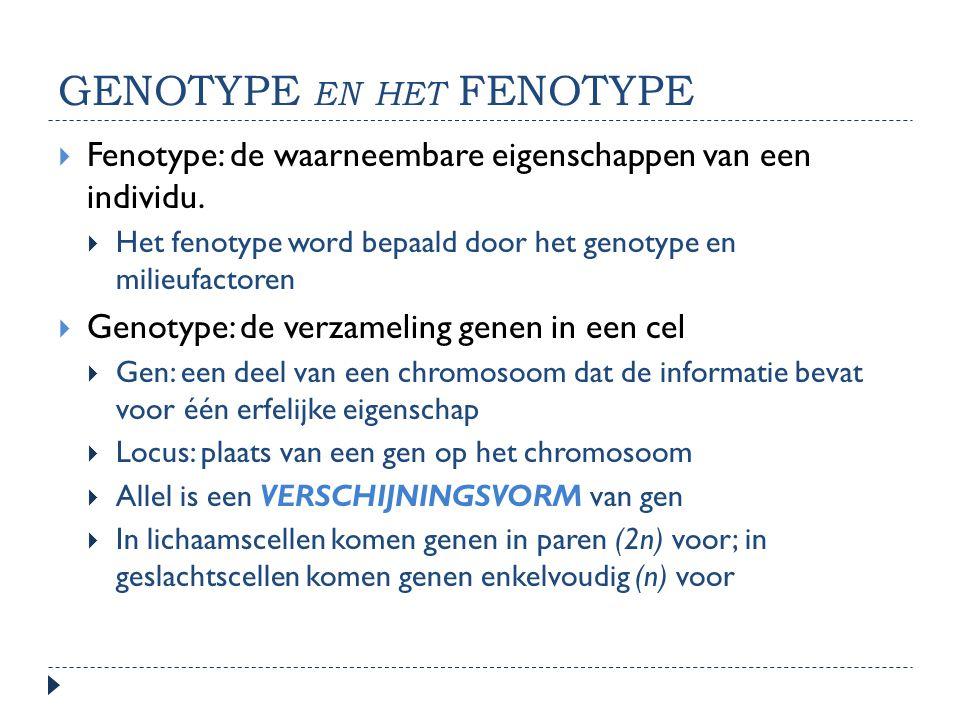 GENOTYPE EN HET FENOTYPE  Fenotype: de waarneembare eigenschappen van een individu.  Het fenotype word bepaald door het genotype en milieufactoren 