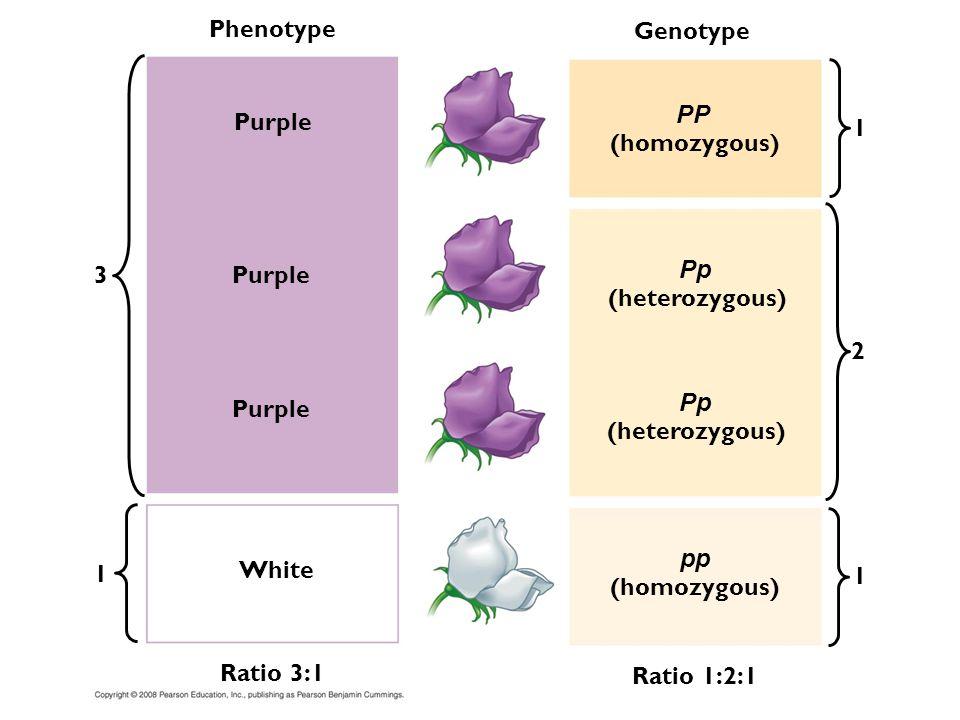 Phenotype Purple 3 Genotype 1 White Ratio 3:1 (homozygous) (heterozygous) PP Pp pp Ratio 1:2:1 1 1 2