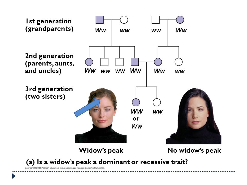 1st generation (grandparents) 2nd generation (parents, aunts, and uncles) 3rd generation (two sisters) Widow's peakNo widow's peak (a) Is a widow's peak a dominant or recessive trait.