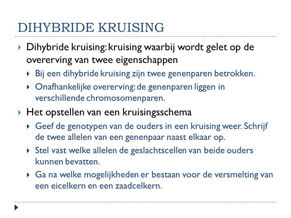 DIHYBRIDE KRUISING  Dihybride kruising: kruising waarbij wordt gelet op de overerving van twee eigenschappen  Bij een dihybride kruising zijn twee g