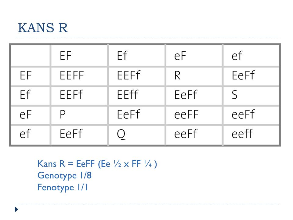 KANS R Kans R = EeFF (Ee ½ x FF ¼ ) Genotype 1/8 Fenotype 1/1