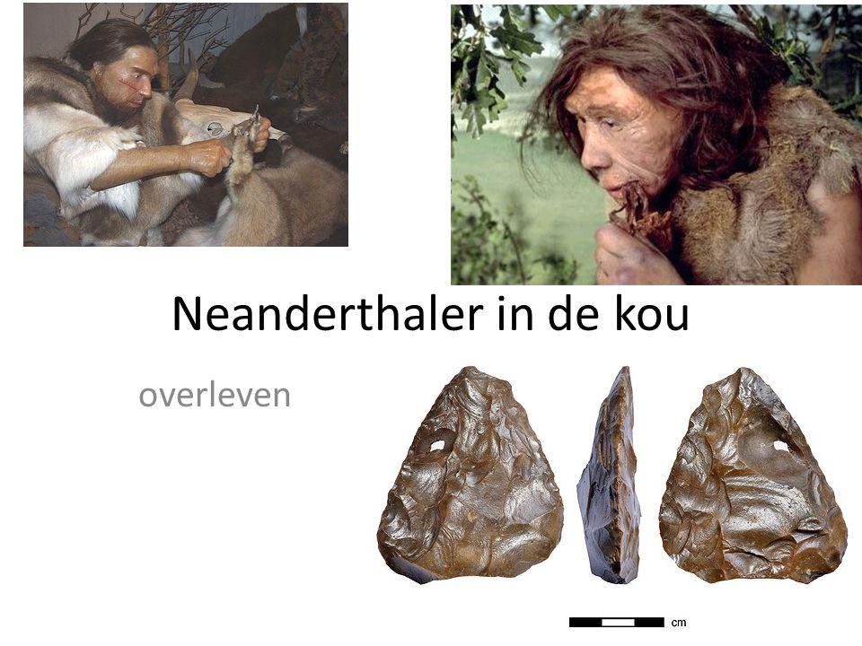 Neanderthaler in de kou overleven