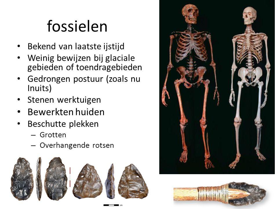 fossielen Bekend van laatste ijstijd Weinig bewijzen bij glaciale gebieden of toendragebieden Gedrongen postuur (zoals nu Inuits) Stenen werktuigen Bewerkten huiden Beschutte plekken – Grotten – Overhangende rotsen Vindplaats eerste fossielen