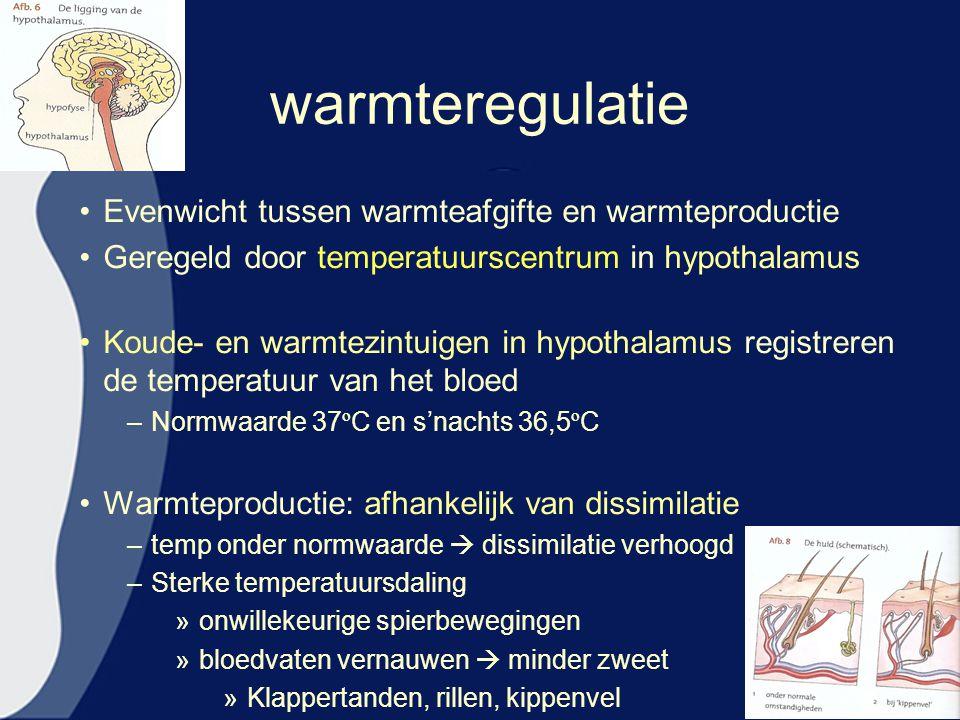 warmteregulatie Evenwicht tussen warmteafgifte en warmteproductie Geregeld door temperatuurscentrum in hypothalamus Koude- en warmtezintuigen in hypot