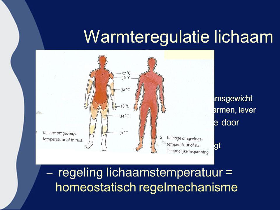 Warmteregulatie lichaam –Binnenste deel lichaam 37 º C –Temperatuur buitenzijde =lager »Dissimilatie buitenzijde is lager –70% warmteproductie door 10