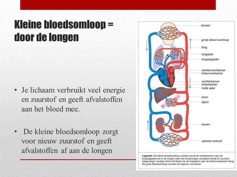 Kleine bloedsomloop = door de longen Je lichaam verbruikt veel energie en zuurstof en geeft afvalstoffen aan het bloed mee. De kleine bloedsomloop zor