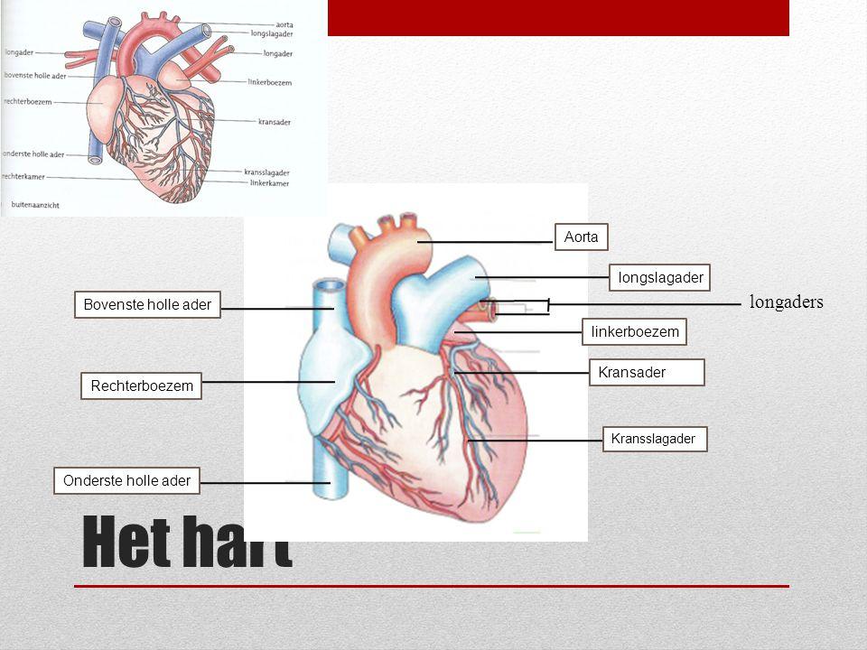 Het hart Aorta longslagader linkerboezem Kransslagader Kransader Bovenste holle ader Rechterboezem Onderste holle ader longaders