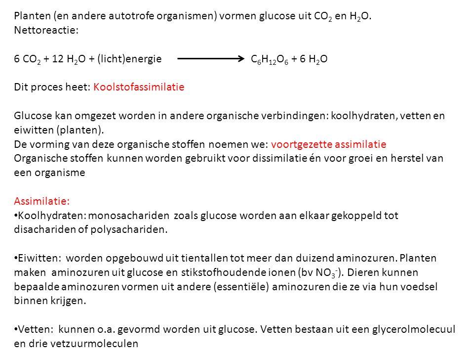 Planten (en andere autotrofe organismen) vormen glucose uit CO 2 en H 2 O. Nettoreactie: 6 CO 2 + 12 H 2 O + (licht)energie C 6 H 12 O 6 + 6 H 2 O Dit