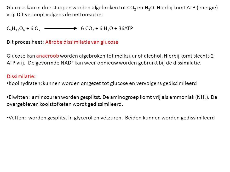 Glucose kan in drie stappen worden afgebroken tot CO 2 en H 2 O. Hierbij komt ATP (energie) vrij. Dit verloopt volgens de nettoreactie: C 6 H 12 O 6 +